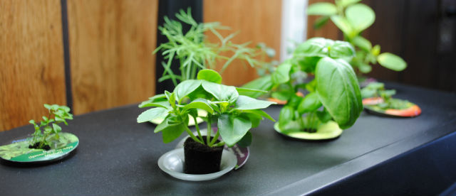 Best Small Hydroponic Systems The Hydroponics Grower