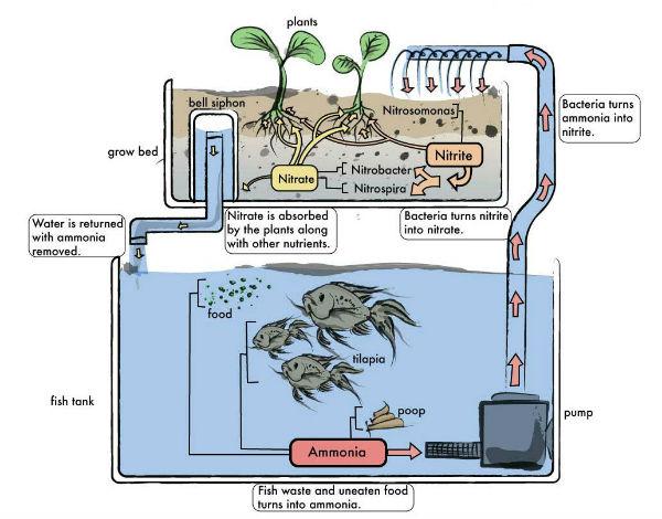 Aquaponic Hydroponic System