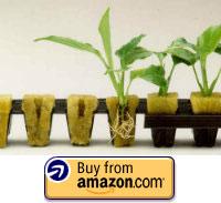 rockwool seedlings